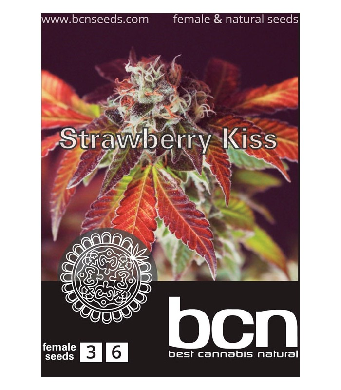 Strawberry Kiss  50 % Sativa - 50 % Indica (6 Unidades) BCN SEEDS