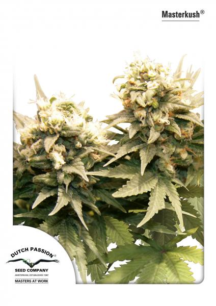 Masterkush Feminizada (10 Unidades) DUTCH PASSION