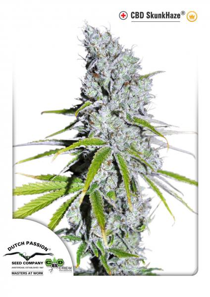 CBD Skunkhaze Feminizada (3 Unidades) DUTCH PASSION