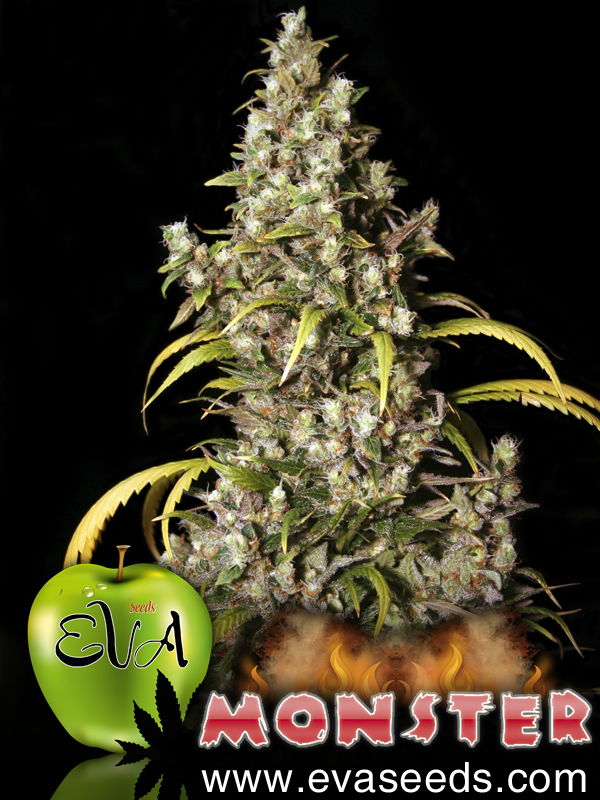 Monster Feminizada (3 Unidades) EVA SEEDS