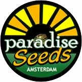 Sweet Purple Regulares (10 Unidades) PARADISE SEEDS