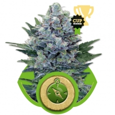 Northern Lights Automatic Auto Florecientes (3  Unidades) ROYAL QUEEN SEEDS