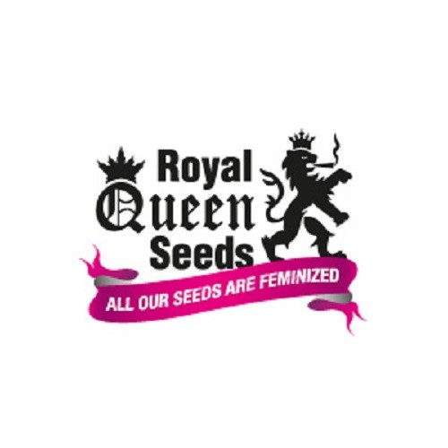 Royal Automatic Auto Florecientes (3  Unidades) ROYAL QUEEN SEEDS